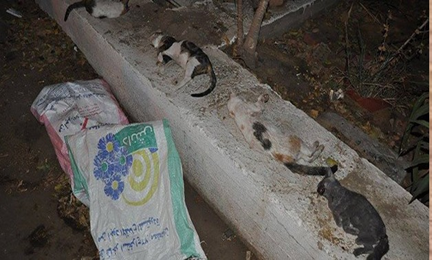 Photo for animal abuse-photo file.