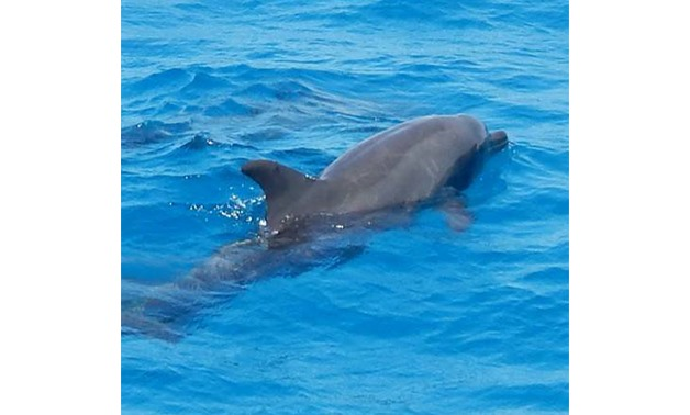 Dolphins by Hurghada Trips