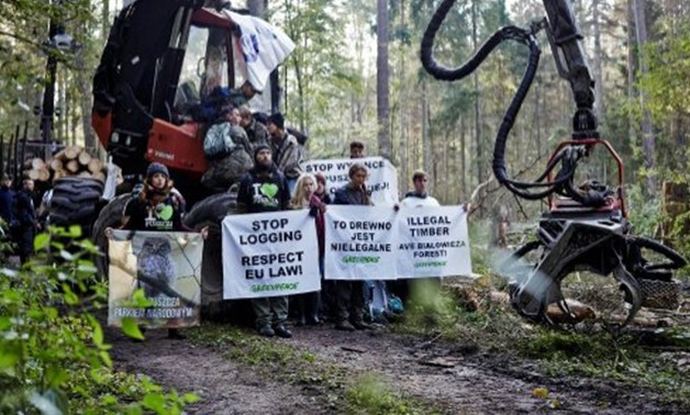 Greenpeace/AFP | Nearly 150,000 people have signed an online letter supporting protesters against Bialowieza logging