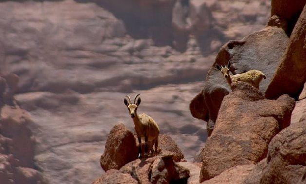 Red Sea and North Sinai reserves - Press photo