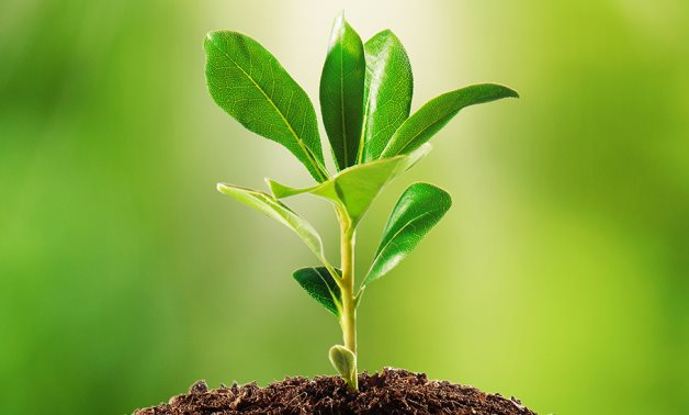 Plant - Wikimedia Commons