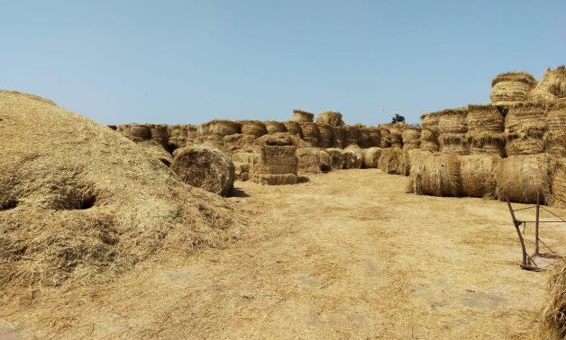 Rice straw collected - Egypt Today