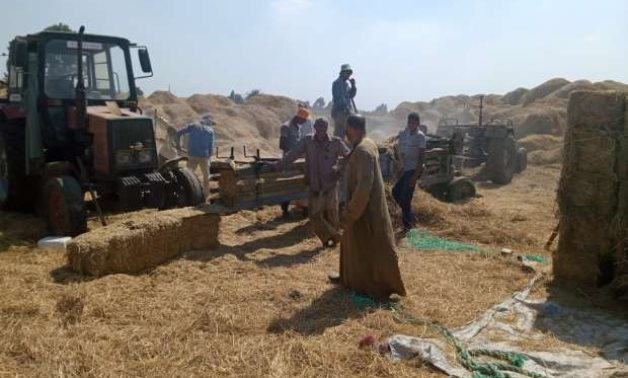 Rice straw collected in Egypt for recycling – Press Photo