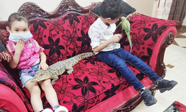 Ever thought of reptiles as pets? Egyptian man raises crocodiles, snakes with his children