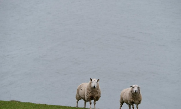 Sheep are seen in front of the shores of Carlingford Lough in Omeath, Ireland, February 17, 2017. REUTERS/Clodagh Kilcoyne