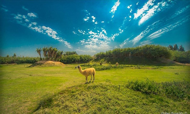 African Park – Best Places of Egypt Face Book Page