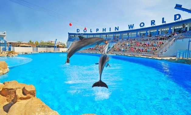 Dolphin World- The Best Places of Egypt Face book Page