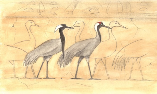 Cranes from the Fifth Dyansty mastaba of Ti, Saqqara, with one Demoiselle Crane (left) and one Common Crane(right)