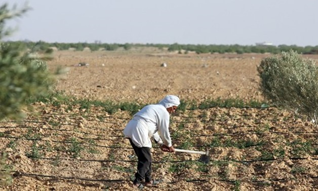 A Farmer Is Cultivating A Piece Of Land In The Desert - The Picture Was Taken In April 2008