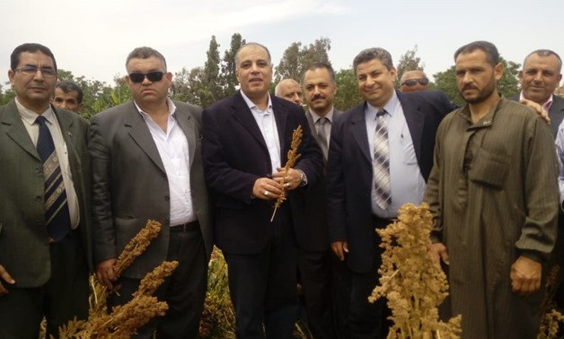The Ministry of Agriculture launched a national campaign to expand the cultivation of quinoa, April 27, 2018 – Egypt Today