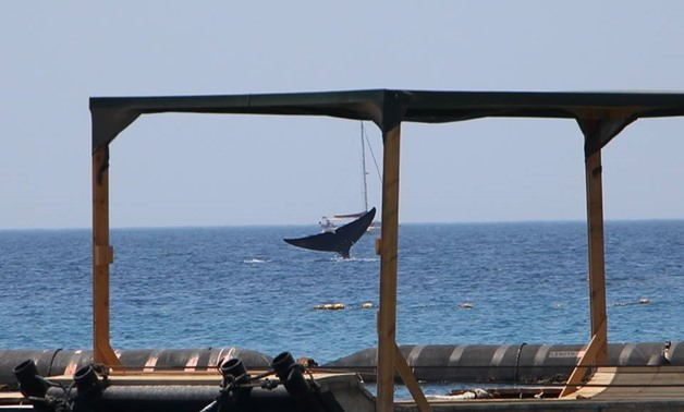 A blue whale spotted in the gulf of Eilat, May 29, 2018 – courtesy of Israel's Nature and Parks Authority