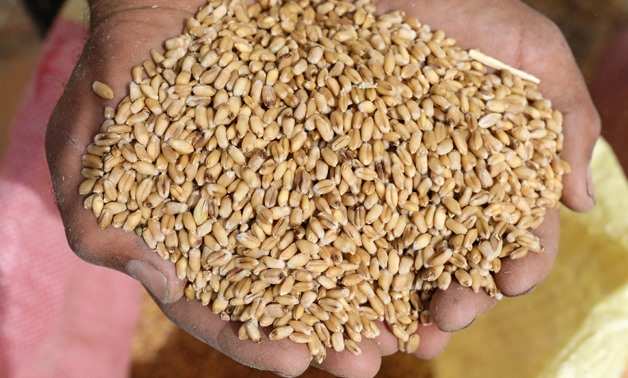 FILE PHOTO: A farmer displays wheat grains at a field in the Beheira Governorate, Egypt May 3, 2018. REUTERS/Mohamed Abd El Ghany/File Photo