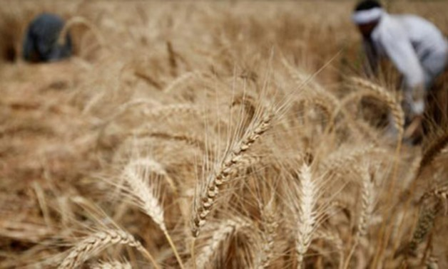 Egypt imports 420,000 tons of wheat from Russia and Romania