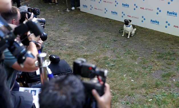 """A Pug dog called Harley, and star of the film """"Patrick"""" poses for photographs at the film's premiere in London, Britain June 27, 2018. REUTERS/Peter Nicholls"""