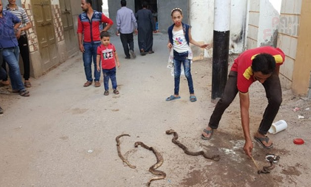 Residents of the village hunt the snakes/ CC ET