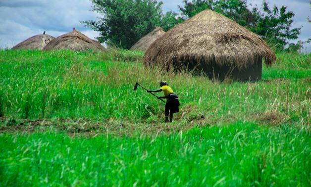 Agriculture in Africa- CC via pexels/ Bamusiime Sylvia