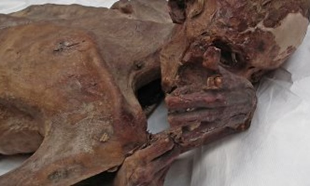 Ancient Mummies - Egypt Today
