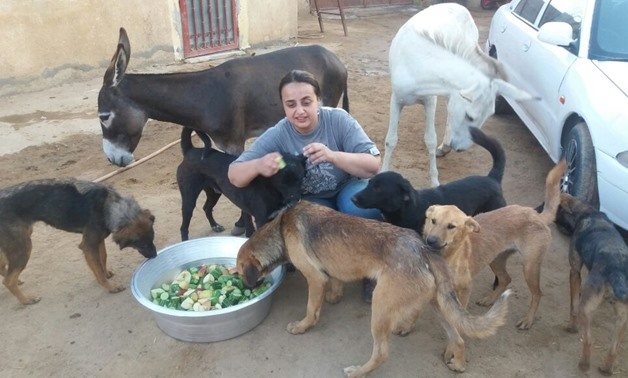 Animal rights activist Salwa Abdoh feeds dogs and donkeys at the farm of Egyptian Society for Defending Animal Rights - ESDAR