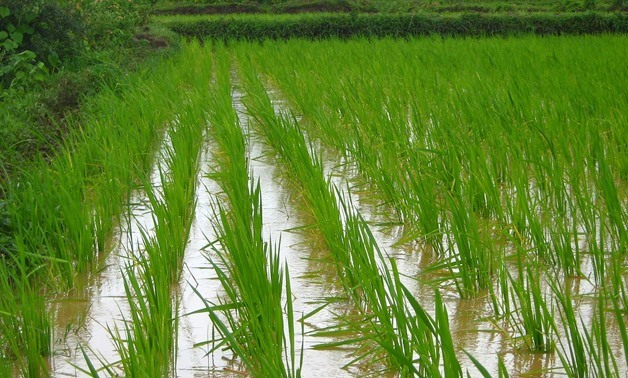 Rice cultivation - CC via Max Pixel
