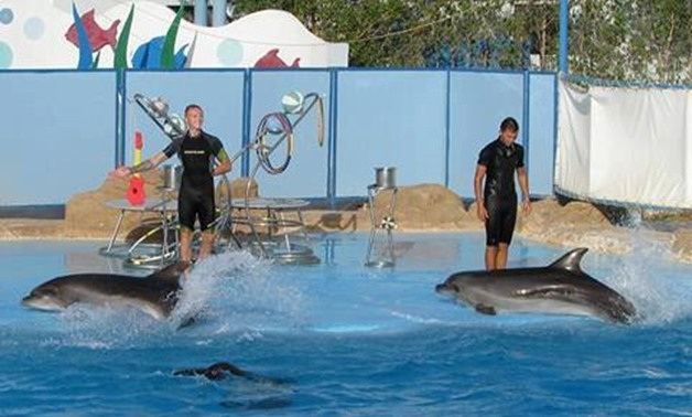 Dolphin Show – The Best Places of Egypt Face Book Page