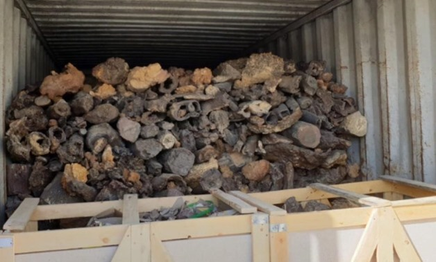 Fossils seized at Ain Sokhna port amid smuggling attempt - Press Photo