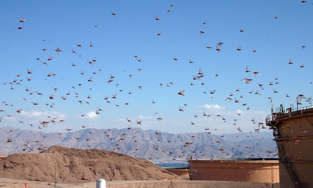 Swarms of locust in Eilat – Flickr/Niv Singer
