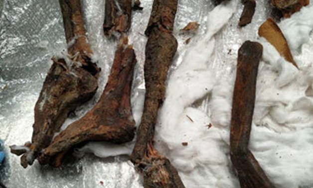 FILE - The Skeletal parts confiscated by authorities