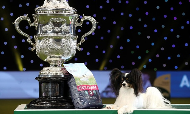Dylan, a Papillon, poses after winning the best in show during the final day of the Crufts Dog Show in Birmingham, Britain March 10, 2019. REUTERS/Hannah McKay