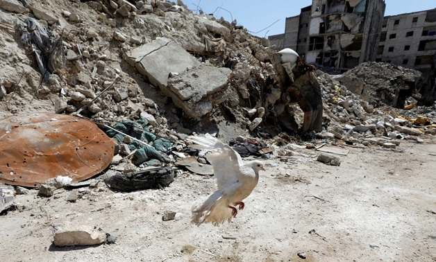 A pigeon flies near mounds of rubble in Aleppo's Salaheddine district, Syria April 13, 2019. Picture taken April 13, 2019. REUTERS/Omar Sanadiki