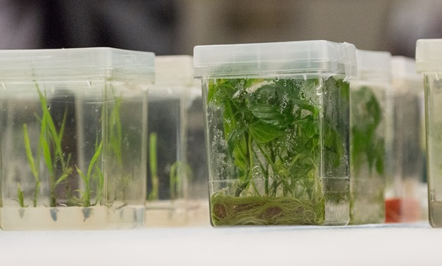 Plant tissue cultures being grown at a USDA facility - CC via Wikimedia Commons/USDA, Lance Cheung