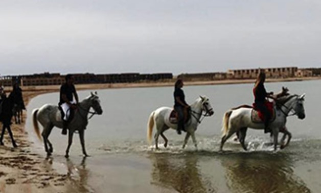 Large number of tourists rides horses in Hurghada