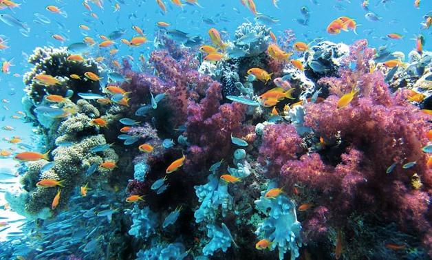 Coral Reefs- CC via Pxfuel