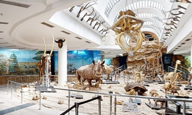 Inside the Zoological Museum in Giza – Screenshot from virtual tour