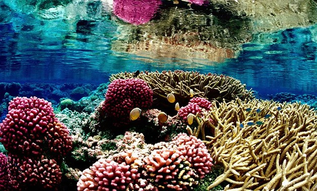 Coral reef ecosystem at Palmyra Atoll National Wildlife Refuge- CC Flickr/USFWS - Pacific Region