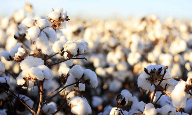 Cotton - CC via Wikimedia Commons/S. Aziz