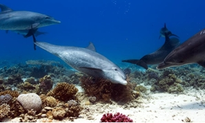 FILE - Tourism in red sea - Egypt