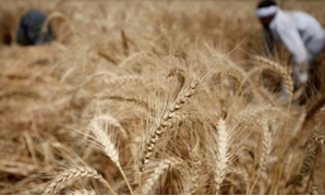 Egyptian court lifts ban on Russian wheat imports