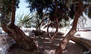 Virgin Mary Tree located in the ancient city of Oxyrhynchus (Bahnasa) - ET