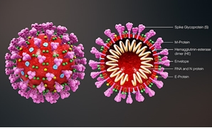 Coronavirus- CC via https://www.scientificanimations.com/