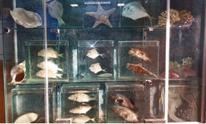 Fish and shells in Alexandria's Aquarium Museum - Egypt Today